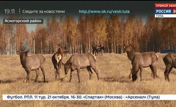 Россия 24 Тула. Эфир от 18.10.2018