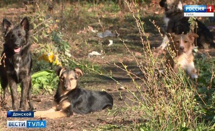 В Донском дачница устроила соседям «собачью жизнь»
