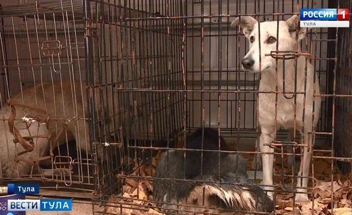 Тульских бездомных животных приютит  «Ника»