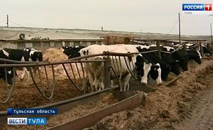 В Туле ожидается снижение производства молока