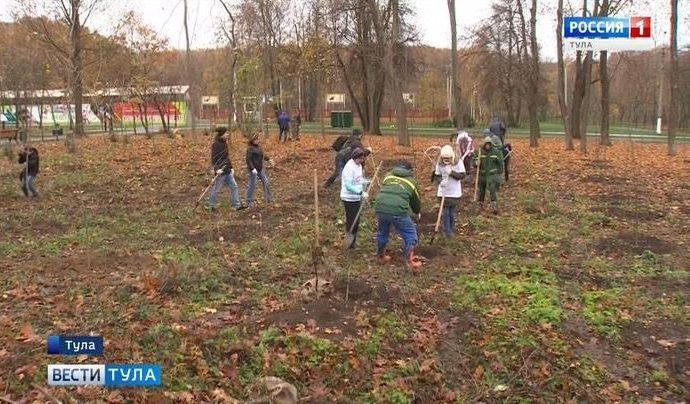 В Центральном парке пострадавшую поляну заполнили саженцами липы и клёна