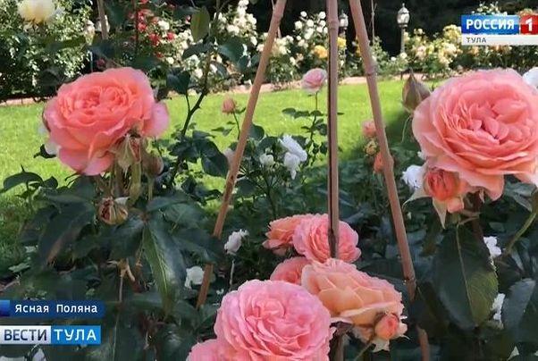 В «Ясной Поляне» высадили розы исторических сортов