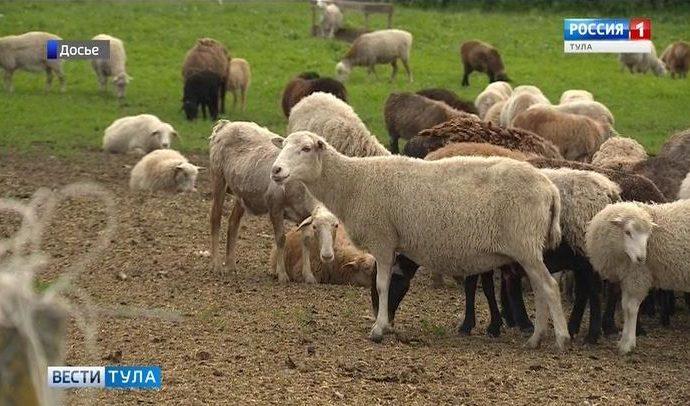 14 начинающих фермеров Тульской области получат гранты