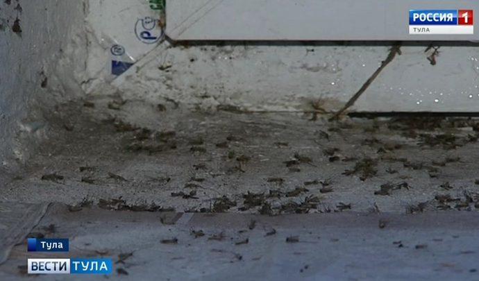 Подвал дома на улице Советской в Туле превратился в инкубатор для насекомых