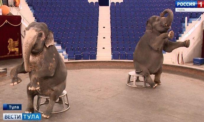До какого числа нужно успеть на Шоу слонов в Тульском цирке?