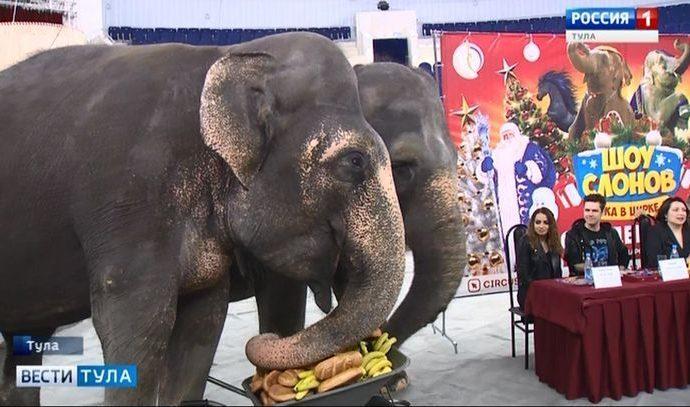 Слоны-полиглоты порадуют туляков