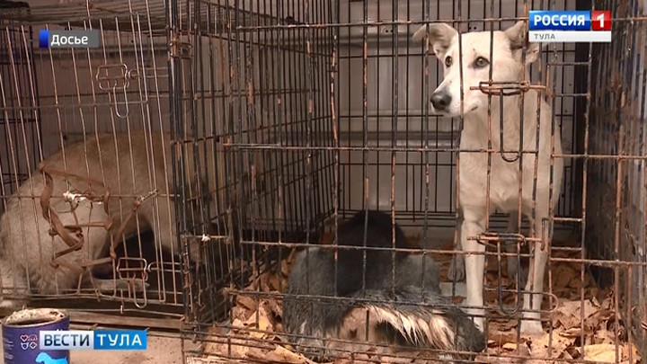В Туле 40 бездомных собак обрели хозяев