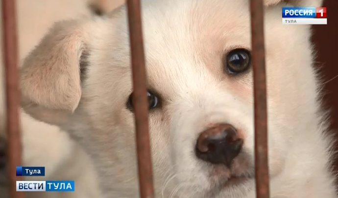 86 бездомных собак ищут хозяев