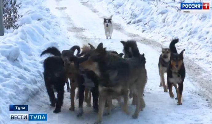 Стаи собак держат в страхе жителей Скуратова