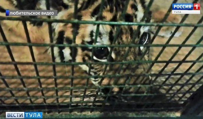 В работе зоопарка в торговом центре «Рио» выявлены нарушения