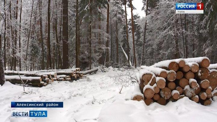 В Алексине хозяева земли решили избавиться от соснового леса