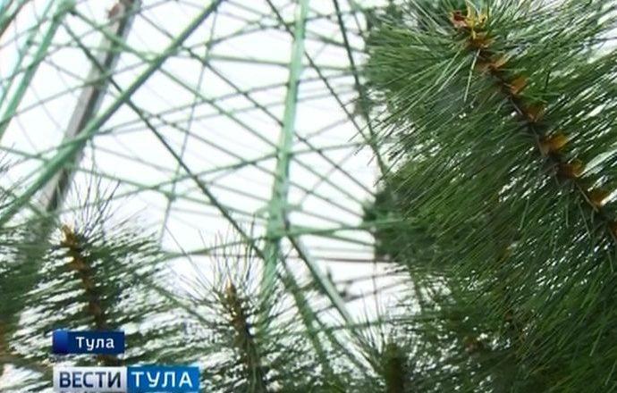 Что натворили вандалы в «Новогодней столице России»?