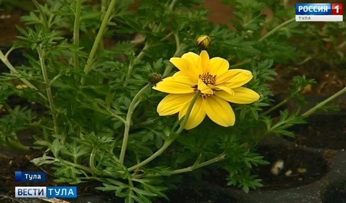 Корреспондент тульских «Вестей» побывала в царстве цветов