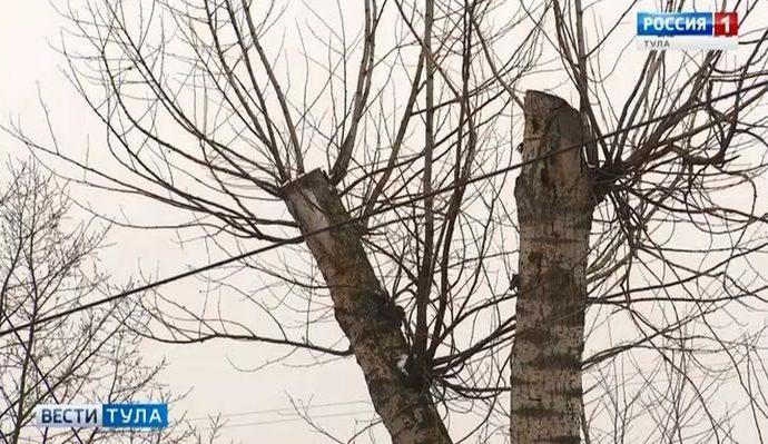 Кронировать деревья в Туле намерены бережно