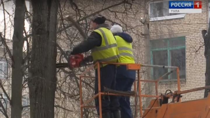 Тульские деревья обрежут по правилам
