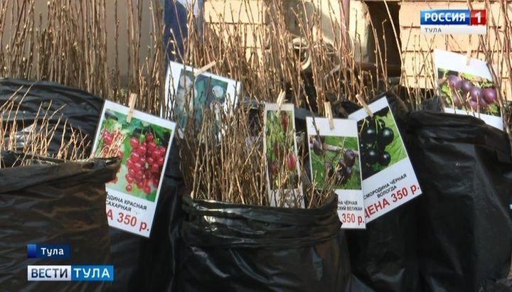 Как купить безопасные саженцы и семена: советы эксперта