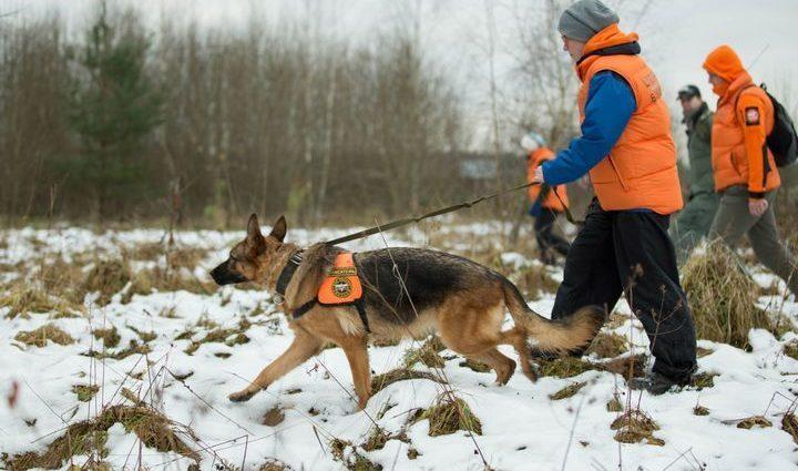 В Суворове двое подростков заблудились в лесу