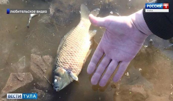 В Чернском районе в пруду погибла рыба