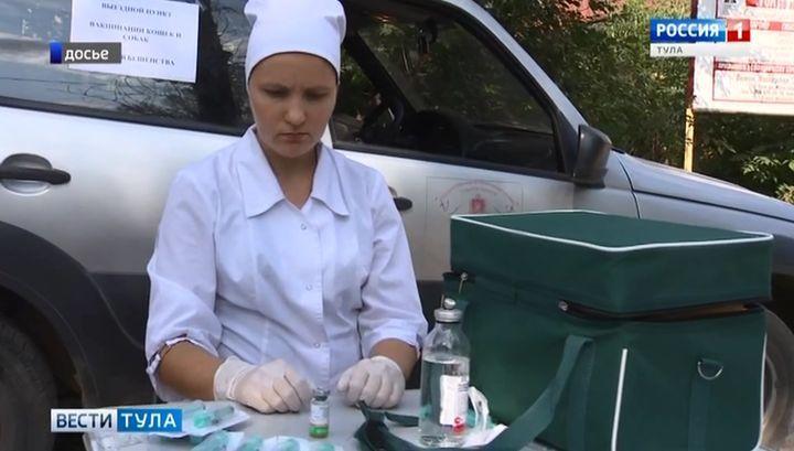 Более 5000 туляков за год были укушены животными