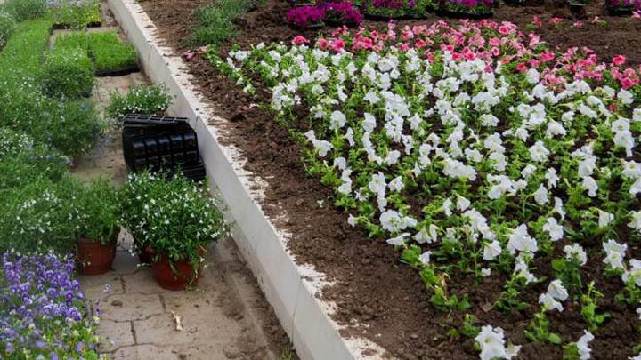 Тулу украшают цветами