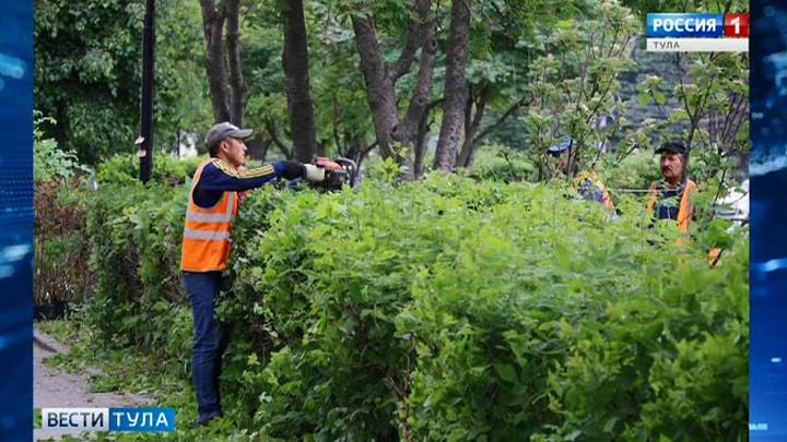 В Туле сегодня  высадят 800 декоративных кустарников