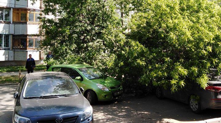 В Туле упавшее дерево накрыло несколько машин