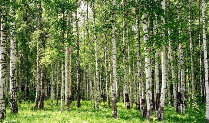 В Тульской области восстанавливают лес