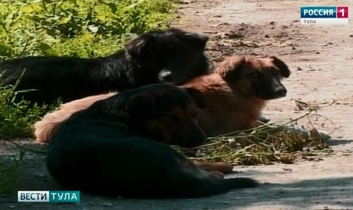 В Донском собаки напали на шестилетнюю девочку