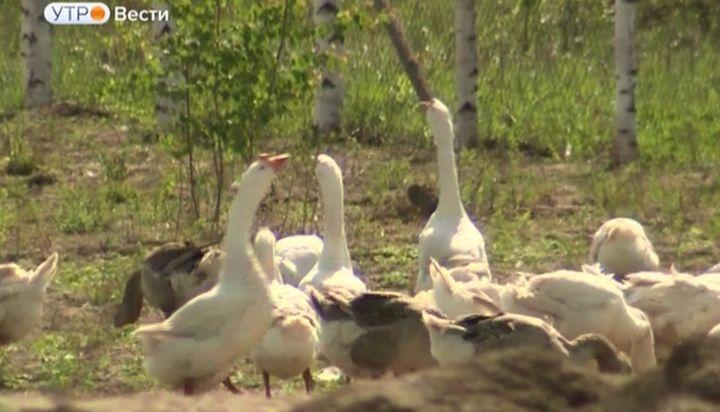 Начинающие тульские  фермеры получат миллионы рублей