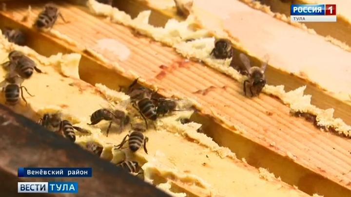 В Минсельхозе прокомментировали массовую гибель пчёл в регионах