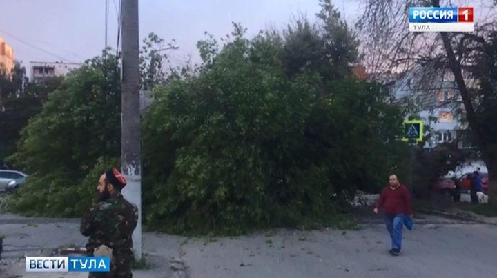 Упавшее дерево перекрыло улицу Кауля в Туле