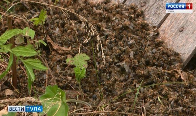Кто ответит за гибель пчёл в Тульской области?