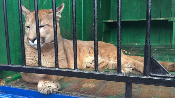 В Новомосковске выявлены нарушения в содержании животных в передвижном зоопарке