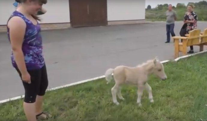 Пломбир или Победитель? В музее «Куликово поле» выбирают имя для  малыша-пони