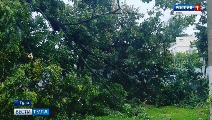 Сильный ветер в Туле валит деревья