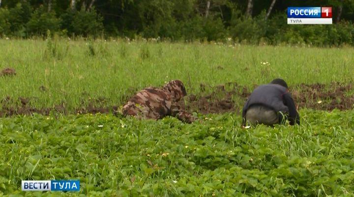«Агростартап» поможет тульским начинающим фермерам