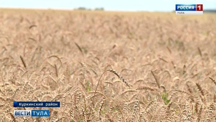 Как повлияли дожди и холод на уборку урожая?