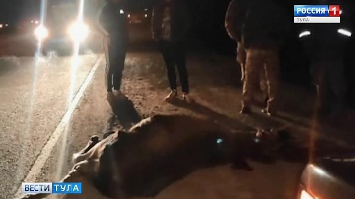 И снова лось. В Тульской области дикие животные бросаются под колеса машин