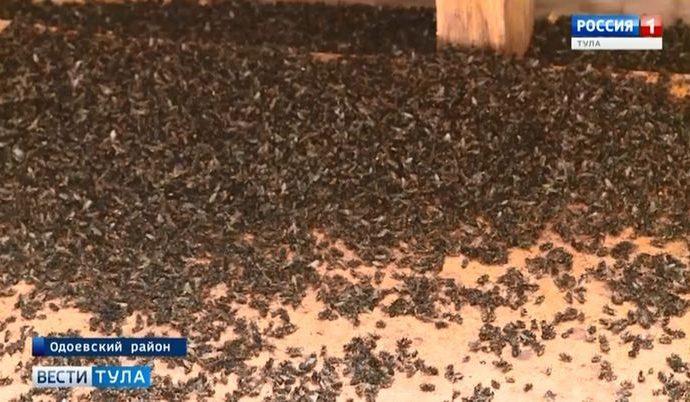 Одоевское село атаковали мухи