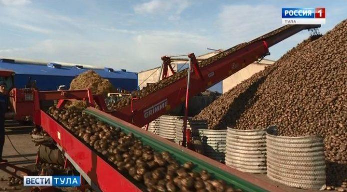 Довольны ли тульские аграрии урожаем картофеля?