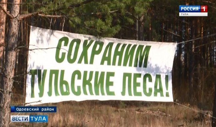 В Одоевском лесничестве после санитарной вырубки высадили сеянцы сосны