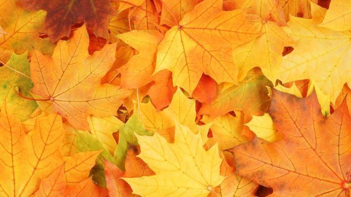 Что изменится в жизни туляков с 1 октября?