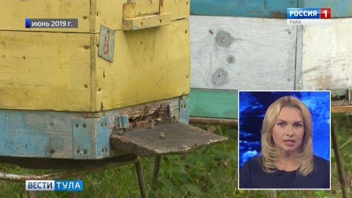 Прокуратура установила виновных в гибели пчел в Тульской области