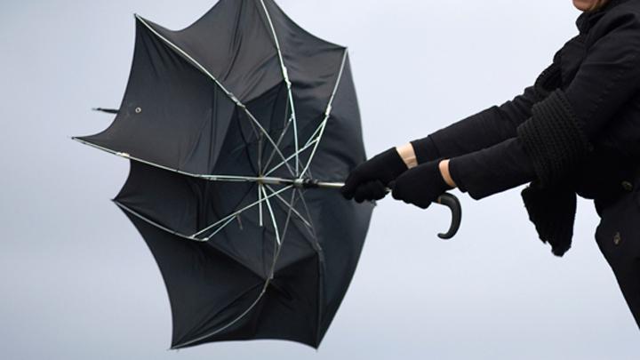 Спасатели предупредили туляков об усилении ветра