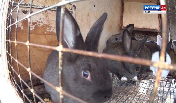 Пробизнес: Кролики