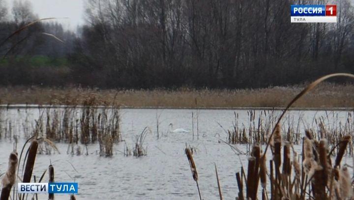Лебедю, который не улетел, нашли место для зимовки в Новомосковске