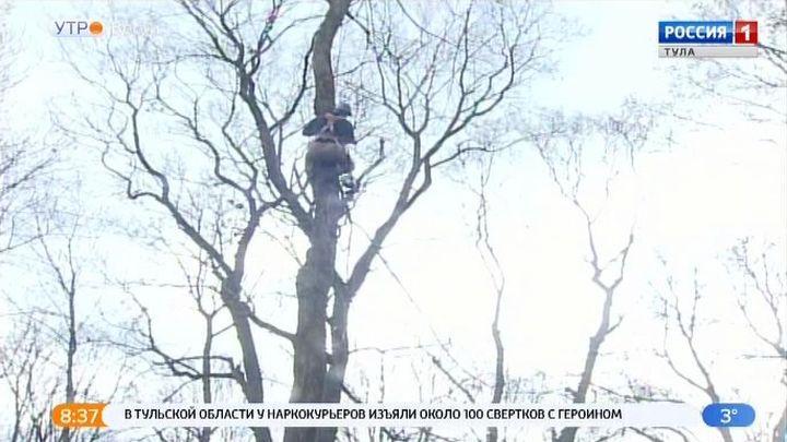 На Всехсвятском кладбище удаляют аварийные деревья