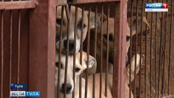 Бездомных животных поместят в будки по размеру