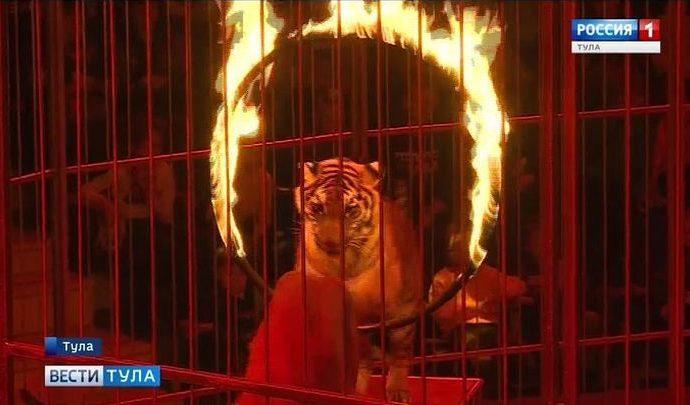 В Тульском цирке начались «Чудеса под Новый год»