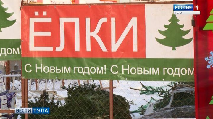 В Туле будут торговать пермскими ёлками